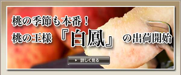 桃[春日居産・白鳳]通販でお届け!